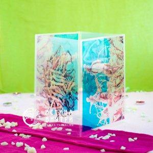 Коробка Женшень и Ярса Гумба